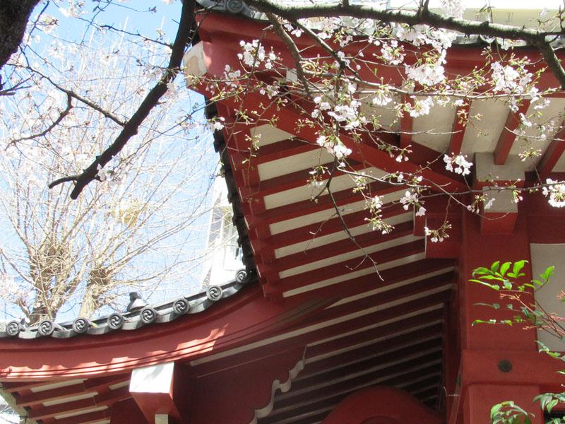 スタジオよもだ → 八幡神社 西浅草